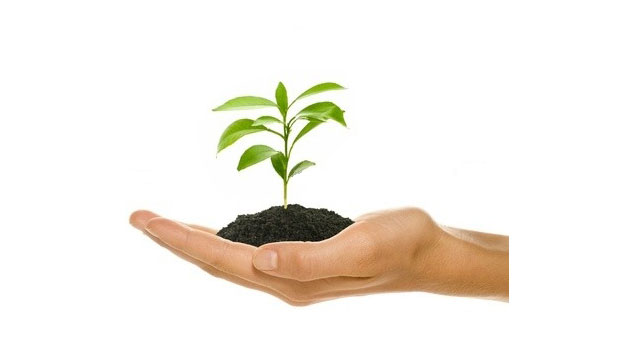Parenting Tip of the Month: Planting Seeds